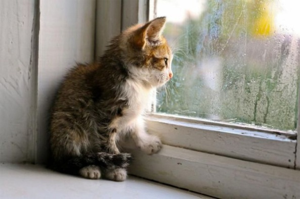 rain_kitten_window